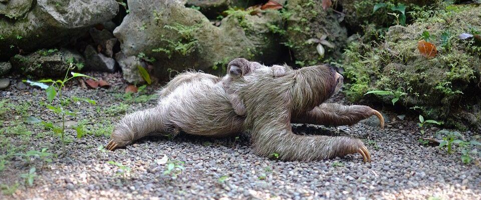 Sloths on Road